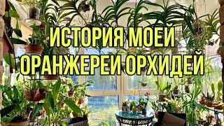 История моей оранжереи орхидей