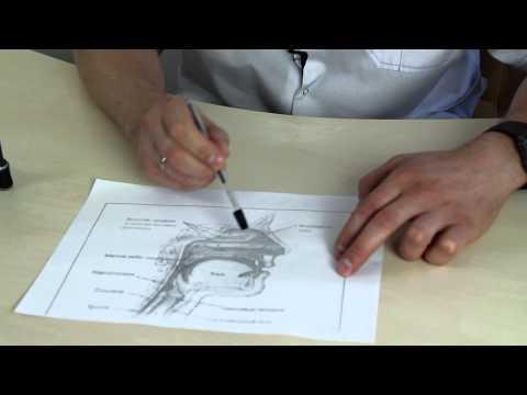 Капли при воспалении в ухе: названия и рекомендации. Ушные