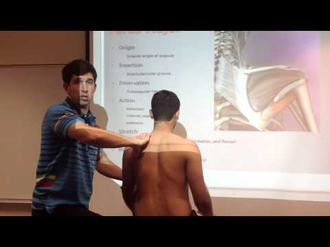 Teres Major: Palpation, Manual Therapy & Stretch