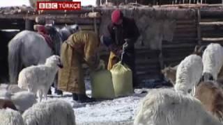 Moğolistan'da soğukla gelen felaket