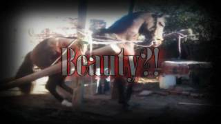 Dancing Horses: Behind The Beauty.