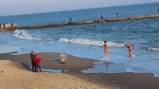 моржи в Одессе
