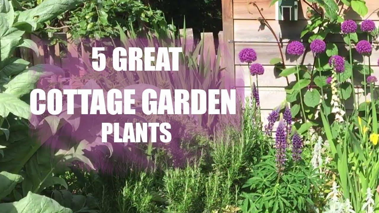 Plants For A Cottage Garden YouTube - Cottage garden plants