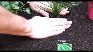 Easy Vegetable Planting Tradition 2014 Alberta Urban Garden Organic Gardening