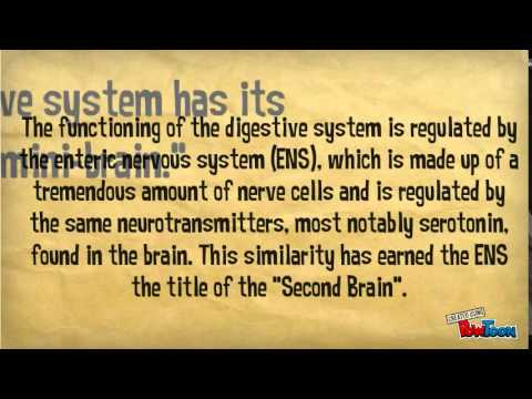 10 Facts About The Digestive System - YouTube