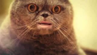 Кот Сальвадор 1 час / Salvador cat 1 hour(, 2012-08-29T13:14:12.000Z)