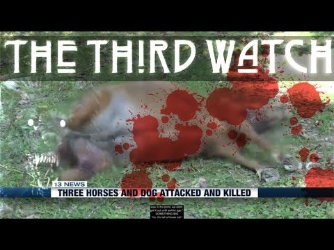 Three HORSES and two DOGS MURDERED by MYSTERY CREATURE in Kentucky