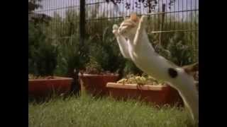 Котёнок играется замедленная съемка / The kitten plays slow motion