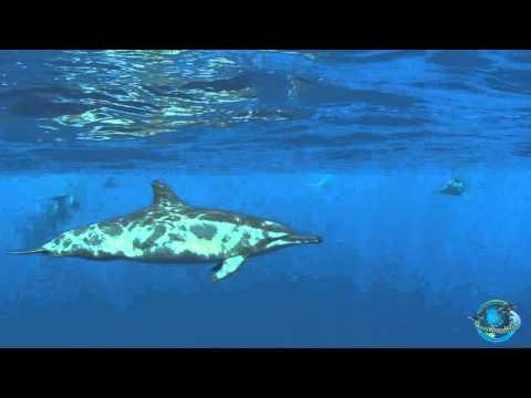 The beautiful oceans of Hawaii (November 7, 2014)