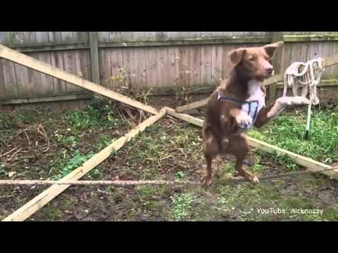 Circus Dog On Tight Rope