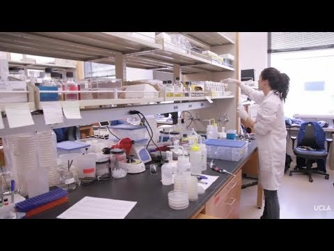 From the lab to the studio - undergraduate research at UCLA