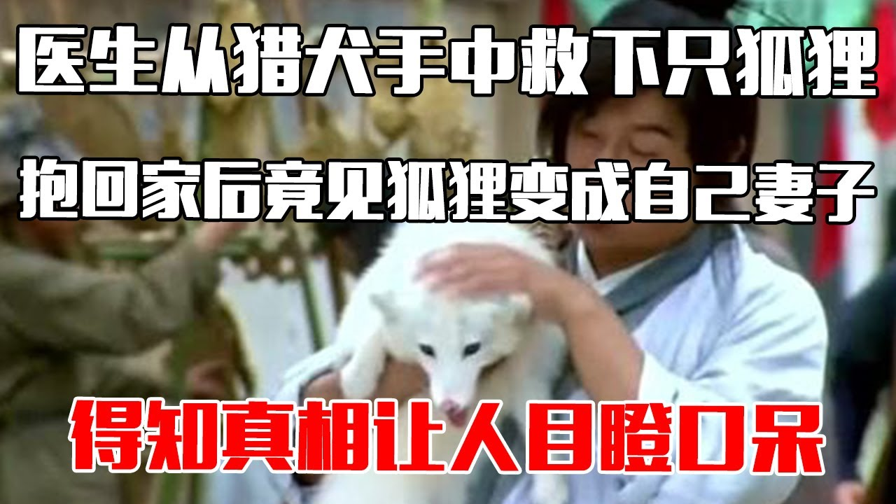 【中国故事】医生从猎犬手中救下只狐狸,抱回家后竟见狐狸变成自己妻子,得知真相让人目瞪口呆