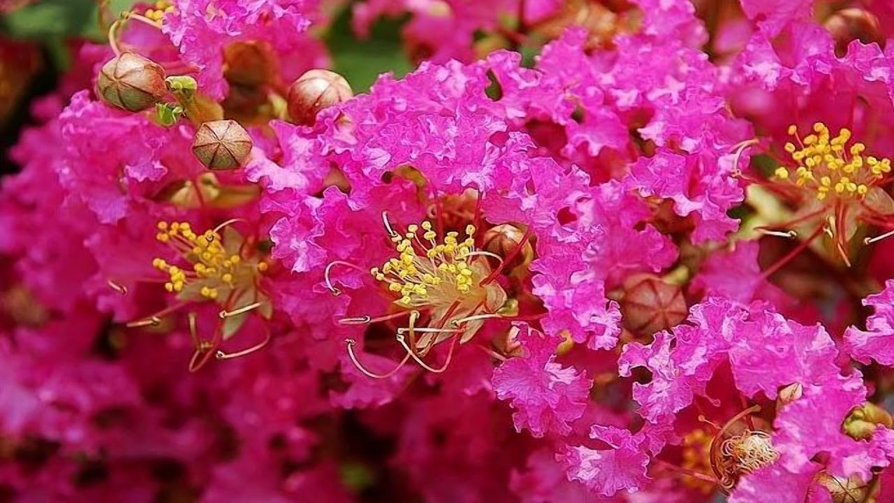 Beautiful Summer Flowers Hd1080p Youtube