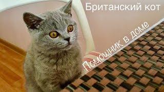 БРИТАНСКИЙ КОТЁНОК помогает по дому / смешной котёнок / British cat