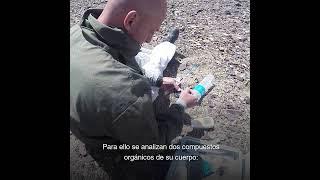 Temaikèn - Proyecto Tiburón Gatopardo: medición del estrés