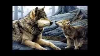 Wilki-The Wolves