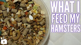 WHAT I FEED MY HAMSTERS 2017