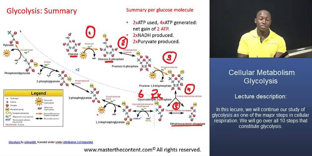 MCAT®: Glycolysis Part 2 - Glycolysis Summary - YouTube