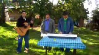PICAFLOR ANDINO (Poto entero) CHILAL - TONGOD