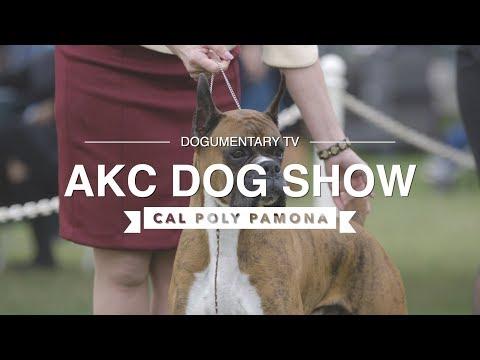 AKC DOG SHOW CAL POLY