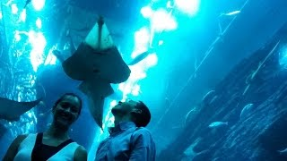 Luana Prazeires Collection: Dubai Parte I (Dubai Mall, Aquarium, Burj Khalifa, Souk Al Bahar)