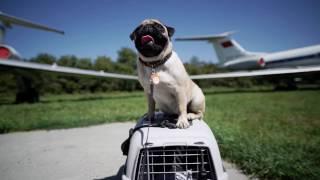 Путешествие с собакой ➠ Ознакомьтесь с советами ветеринара