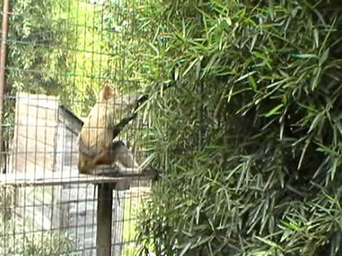 Cool Animals at the Zoo of Acadiana YouTube