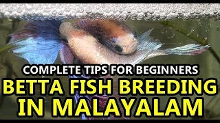 Betta fish breading tips in Malayalam for Beginners | Complete Tutorial