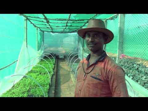 Aquaponics: Sustainable farming for rural India