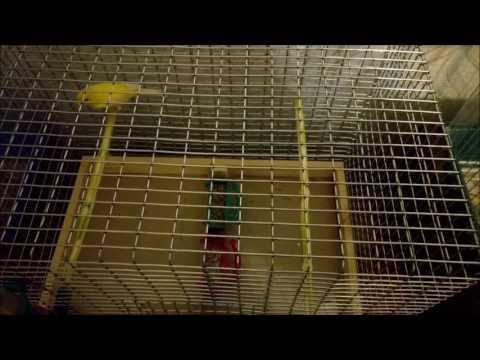 Самодельная клетка для птиц своими руками. Как и из чего сделать.