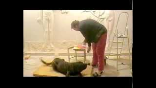 Sculptor and a dog and a broken stool ... Скульптор и собака и поломанная табуретка...