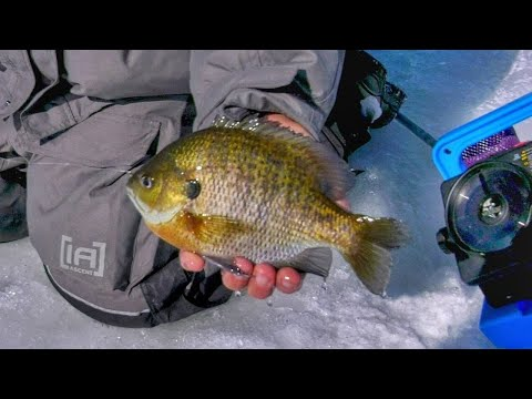 Panfish Finesse In Madison