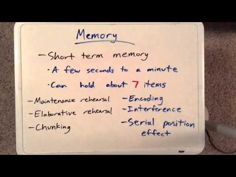 Cognition [Part 1/3] - AP Psychology Review