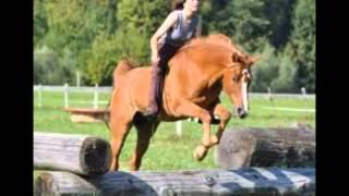 Ein Pferd erzählt seine Geschichte
