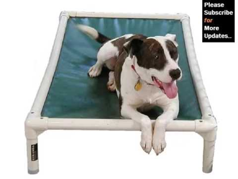 dog-beds-pictures-and-ideas---dog-products-&-accessories