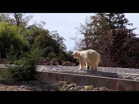 Detroit Zoo | Under The Radar | Pure Michigan