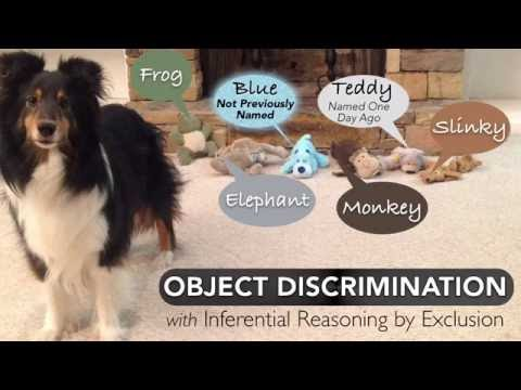 Smart Dog!  Object Discrimination - with inferential reasoning by exclusion