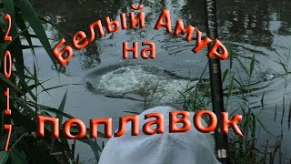 Рыбалка на поплавочную удочку,ТРОФЕЙНЫЙ АМУР на кукурузу