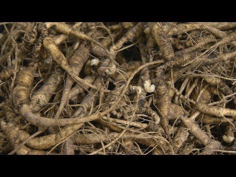 Wisconsin DNR Regulates Wild Ginseng