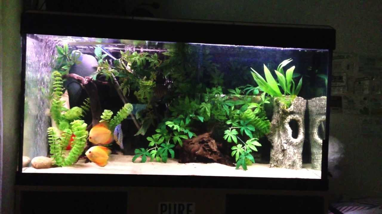 4 discus aquarium set up info youtube
