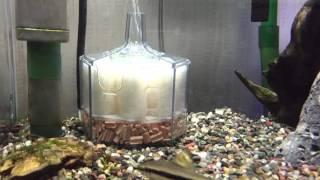 Repeat youtube video 僕の水作エイト コア 10日間 と、通水観察。すこし亀