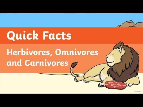 Quick Facts: Herbivores, Omnivores And Carnivores Video