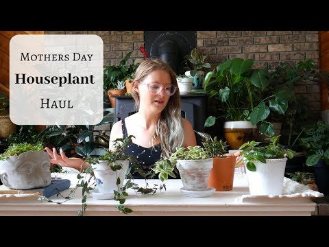 Mothers Day Houseplant Haul