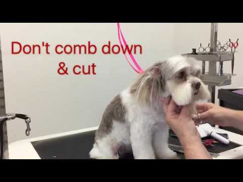 Sue Wright - dog grooming - Maltese cross shihtzu face