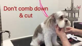Sue Wright  dog grooming  Maltese cross shihtzu face