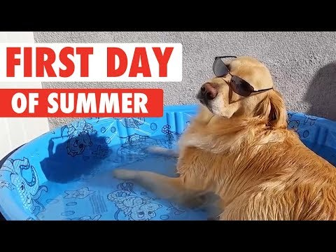 First Day of Summer Pets