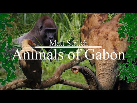 Animals of Gabon