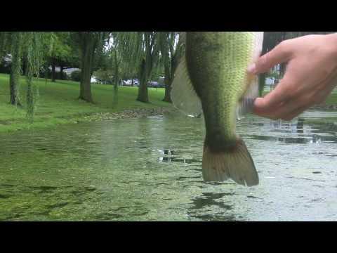 Northern Illinois topwater bass