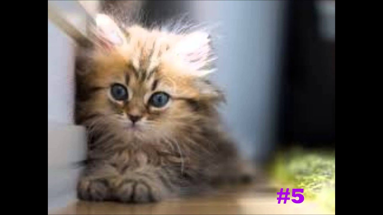 Top 10 Cutest Cats Ever Youtube