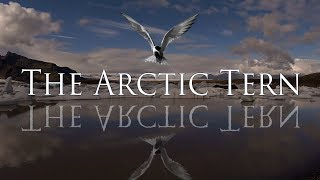 Video The Arctic Tern - Channel Intro download MP3, 3GP, MP4, WEBM, AVI, FLV Agustus 2018